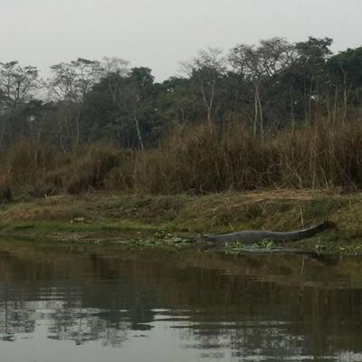 ktm.chitwan.pkr